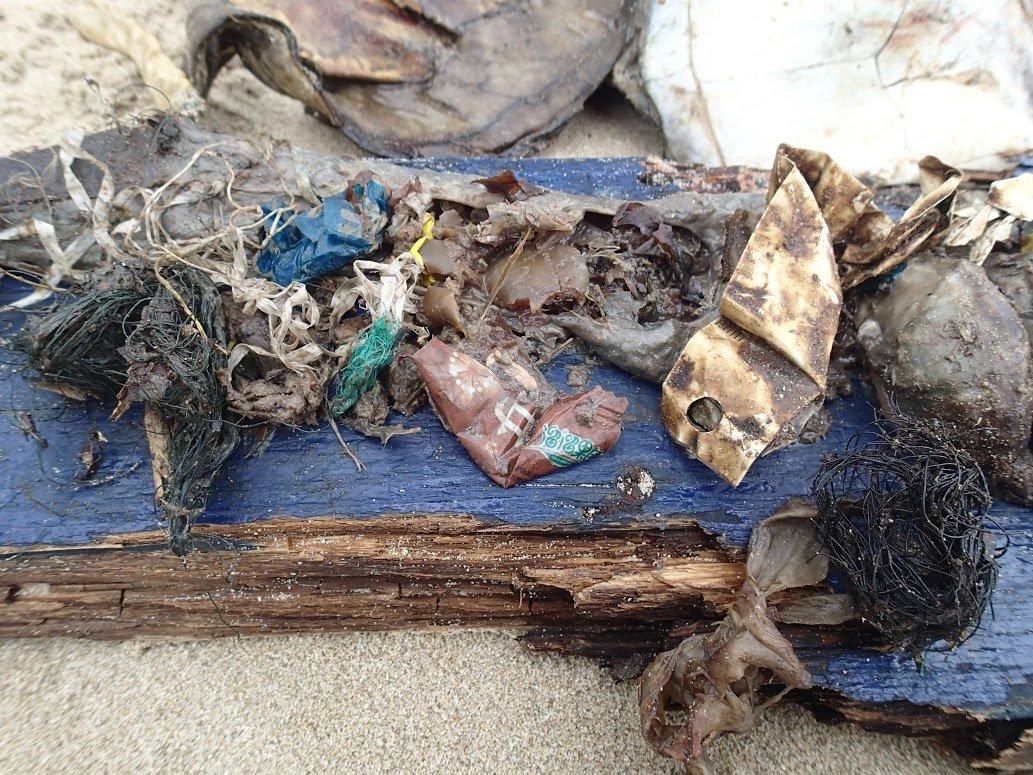 story about fish plastic debris